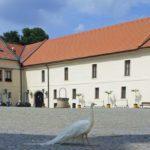 Schloßhof mit Albinopfau